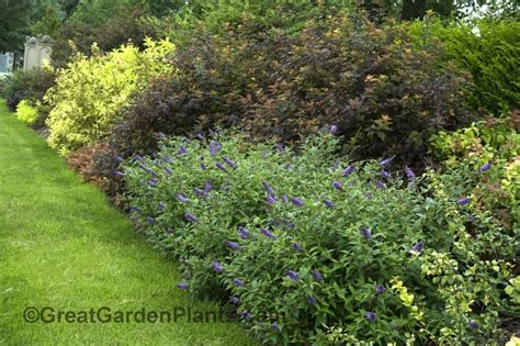17 best images about shrub borders on pinterest gardens