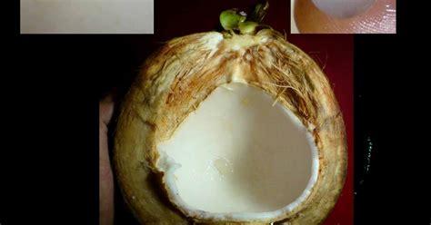 Minyak Kelapa Ijo mustika kelapa barang antik bertuah 999