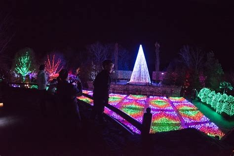 light show christmas lights winter winter lights the carolina arboretum