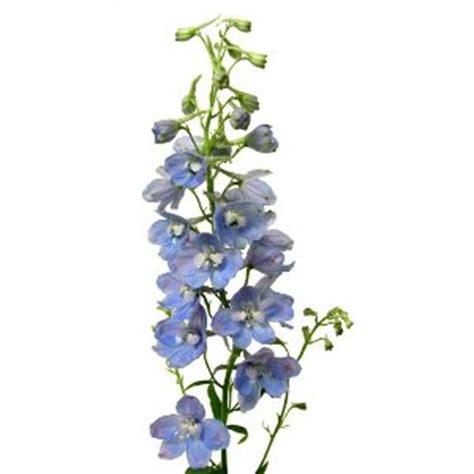 Sprei Single Belladona Beladona Classic light blue delphinium flower