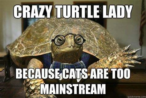 Turtle Memes - 1000 images about turtles on pinterest