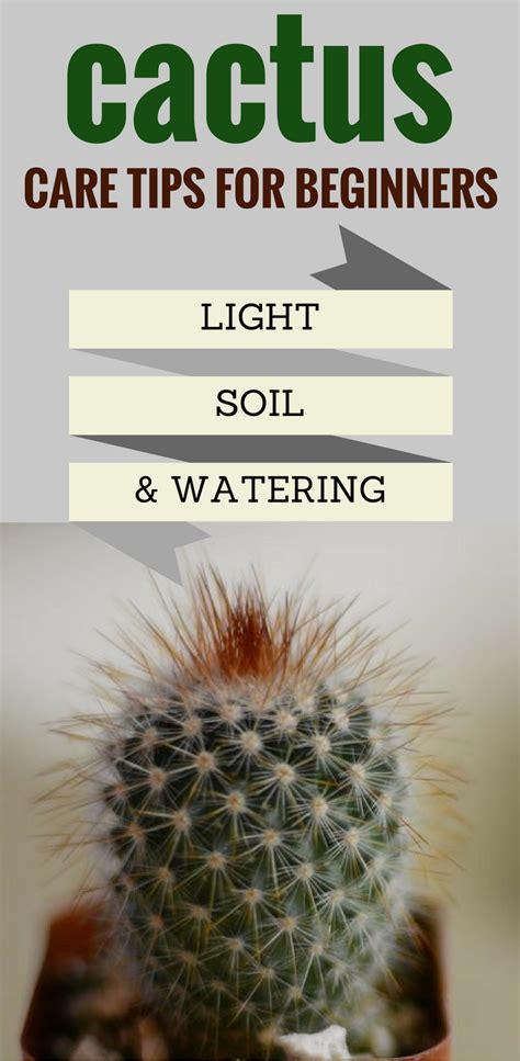 cactus care tips  beginners light soil  watering