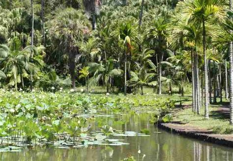 mauritius botanical garden the botanical garden in mauritius the best way to visit