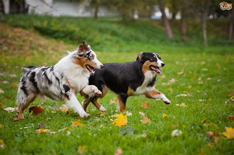 how dogs how to encourage your to play nicely with strange dogs pets4homes