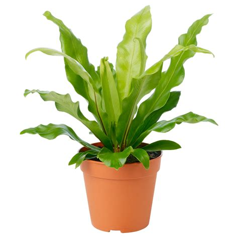 photo potted plant cutout flora green