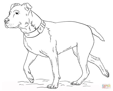 pitbull coloring pages free coloring pages of pitbull