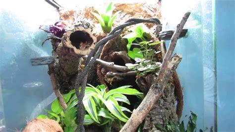 plants   crested gecko vivarium youtube
