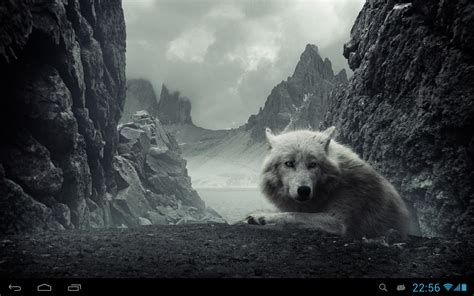 google themes wolf wolves live wallpaper android apps on google play