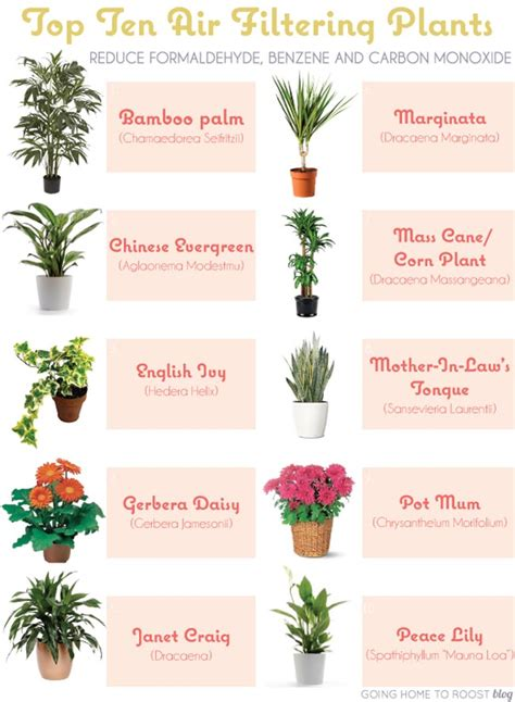 best indoor plants for clean air 6 house plants that clean your air positivemed