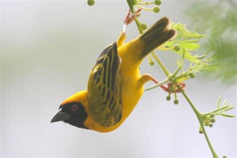 central america birds ornithology