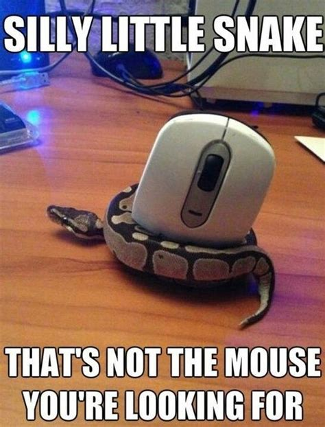 Snake Meme - 7 best images about snake memes on pinterest mice microwaves and lol