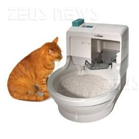 cassetta gatto autopulente zeus news notizie dall olimpo informatico