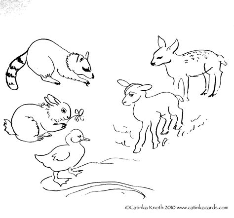 coloring pages spring animals spring baby animals coloring pages