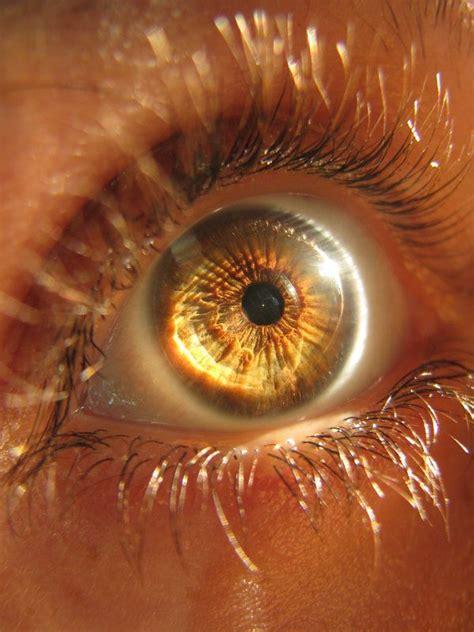 gold eye color best 25 ideas on character