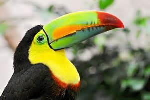 Wild adventures with rainforest animals in belize amble resorts
