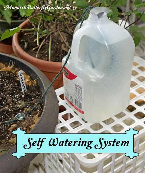 self watering survival tips for indoor house plants while on vacation