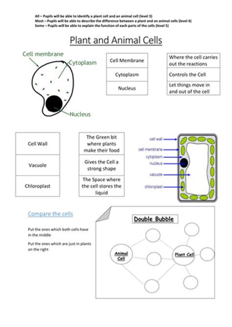 cells worksheet ks3 plant and animal cells by l mullany teaching resources tes