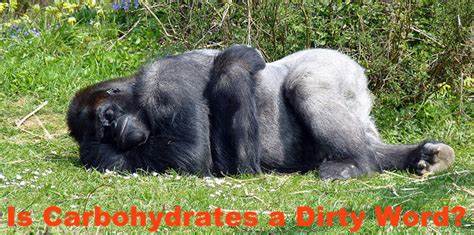 carbohydrates after 6pm is carbohydrates a word the gorilla pit members