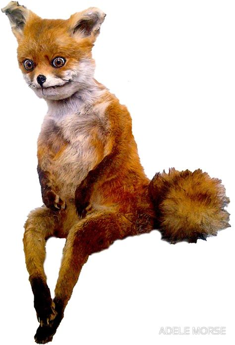 Meme Fox - taxidermy fox meme 28 images taxidermy fox meme 100