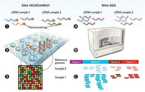 illumina microarray an array of options the scientist magazine 174