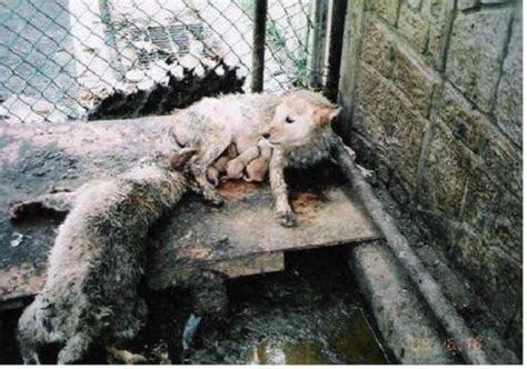 korean dogs news articles stop the and cat consumption in s korea