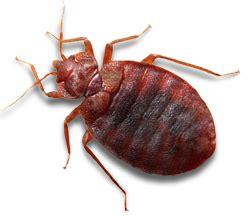 pest control services cockroaches bed bugs hamilton pest