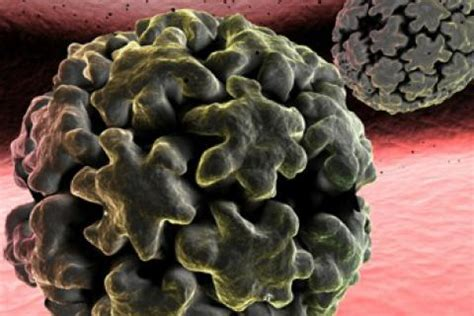 google imagenes del papiloma humano virus del papiloma humano vph qu 233 es salud al d 237 a
