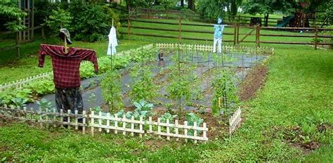 crop rotation vegetable garden vegetable garden crop rotation made easy today s homeowner
