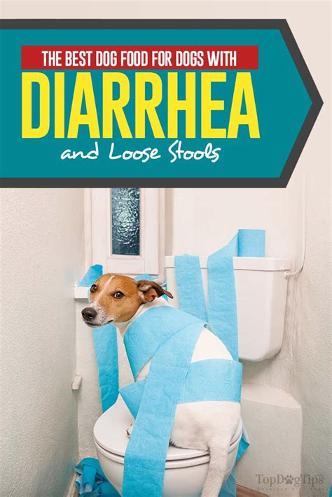 Food For Dogs With Stools the best food for dogs with diarrhea and stools