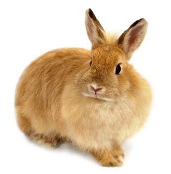Outside Rabbit Hutch Pet Rabbit Care Sheet Amp Bunny Supplies