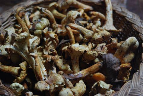galletti funghi come cucinarli dai fagioli di teresina ai fagioli di marilina ricetta