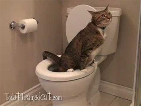 cat keeps pooping in bathtub miki the cat pees in the toilet youtube