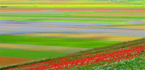 fiorita castelluccio di norcia la fiorita la fioritura di castelluccio di norcia dal
