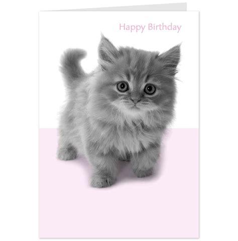 Cat Birthday Card Cute Cat Birthday Quotes Quotesgram
