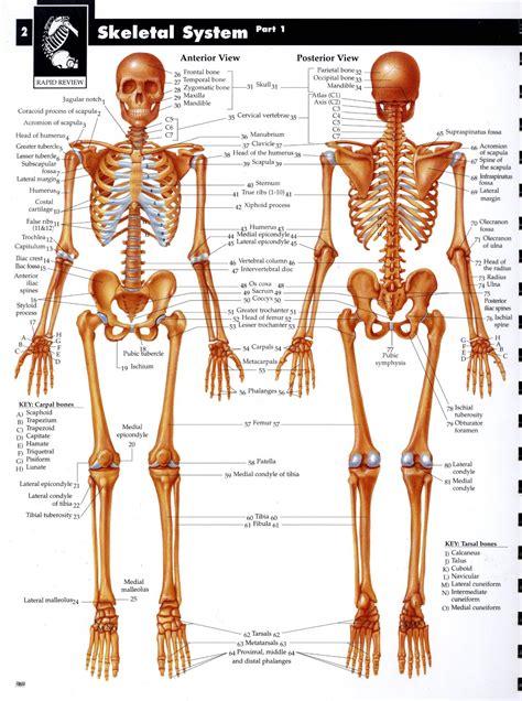 anira  sistem muskuloskeletal