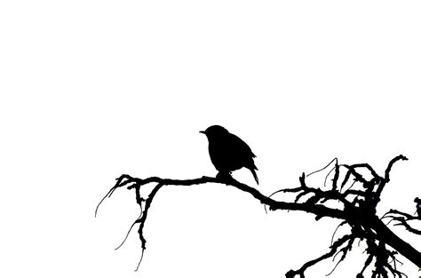 Kagenos Springtime Of 05new Releasefree Sul vector silhouette of the bird free stock photo