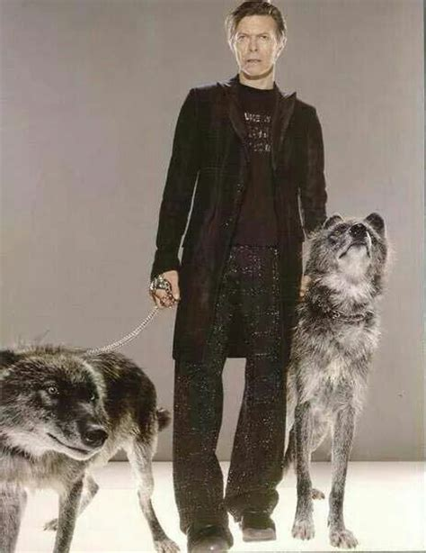 david bowie dogs 10 best images about cool bowie on the thin white duke kevin o leary and duke