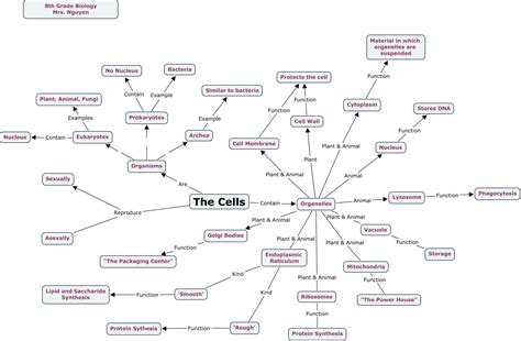 cell concept map answers animal plant cell diagram biology animal free engine