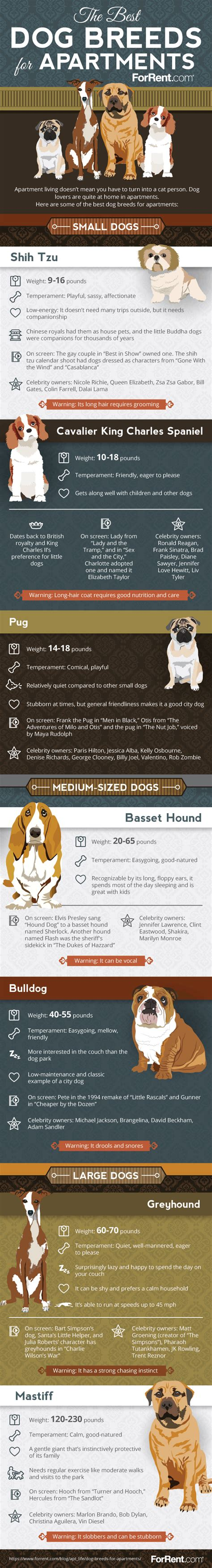 large breeds for apartments infographic the best breeds for apartment living the dogington post