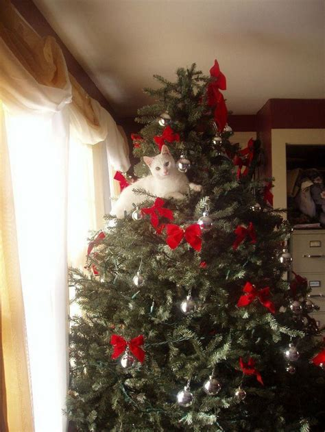 24 cats that have turned the christmas tree into their new