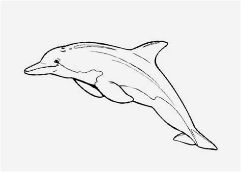 free coloring pages of dolphins dolphin coloring pages free coloring pages and coloring