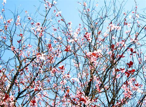 rami fiori fiori e rami briciole di nuvola