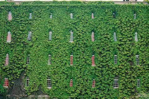 house plants  grow   bedroom