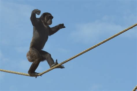 tight rope why diets don t work until they do 187 paul chek s