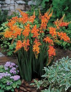 546 best images about sunset zone 3 garden on pinterest drought tolerant shrubs and