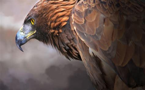 eagle digital art  hd artist  wallpapers images