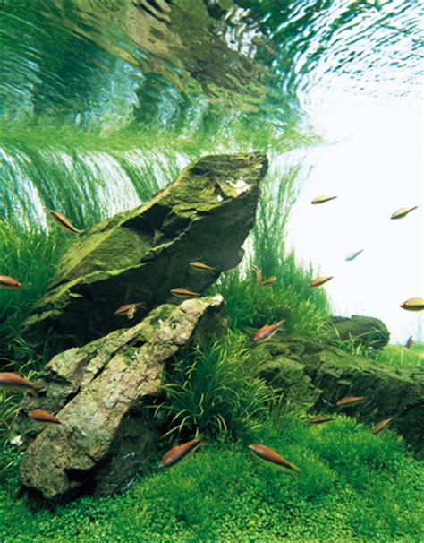 takashi amano aquascape nature aquarium photographs amanotakashi net