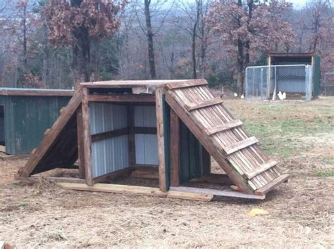 Building Small Barns Sheds Shelters Goat Housing Pallets Lolly Lazing In Her New Shelter I