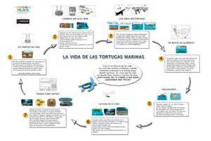 imagenes de ciclo de vida de la tortuga el ciclo de la vida del colibr 237 ahuehuete tortuga y