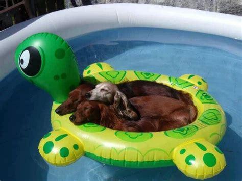 dog boat float floating dogs fun puppy stuff pinterest